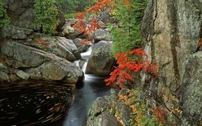 ручей,  камни,  вода,  деревья,  листья