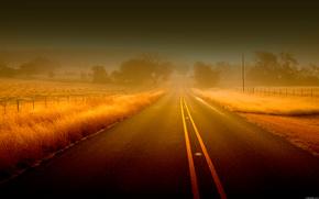 carretera, rastrear, niebla