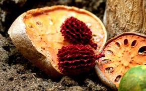 сухие,  фрукты,  природа