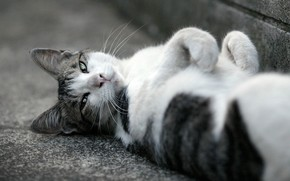 cat, asphalt, muzzle