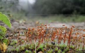 паутина,  трава,  капли,  макро