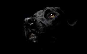 чёрный цвет, чёрный пёс, стиль