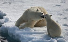Bears, neve, nord
