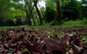 公園, 葉, マクロ