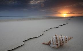 море,  ракушка,  закат