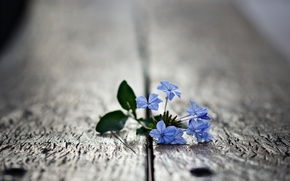 цветок,  природа,  красота