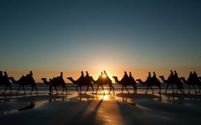 caravan, Camels, sky