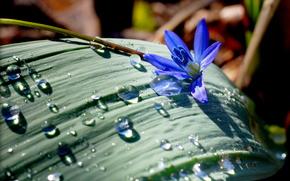 flower, drops, nature