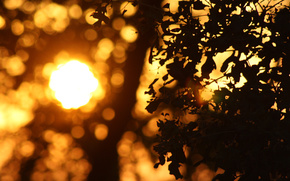 Sunset, evening, sun, leaves, reflections, nature