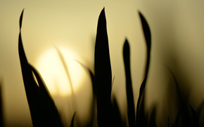 Sunset, evening, grass, nature, macro