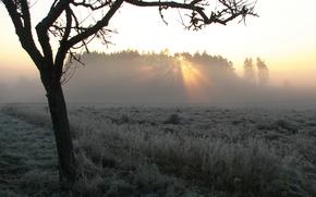 fog, tree, field, landscape