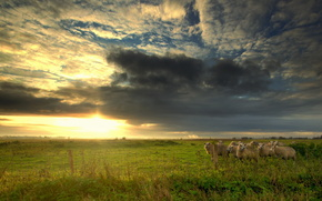 Sheep, field, sky