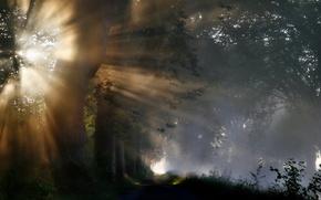 свет,  деревья,  природа