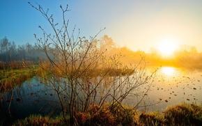 natura, tramonto, lago, bellezza