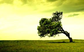champ, arbre, solitaire, lgumes verts