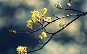 性质, 春天, 支, 肾脏, 离开, 厂, 照片, 图片, 壁纸