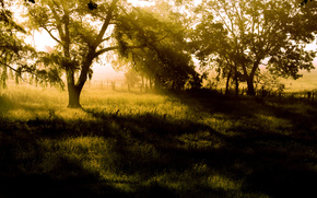 Morning, fog, rays