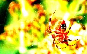 фон, жёлтый, паук, паутина