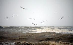sea, waves, Gulls, nature, wind, water
