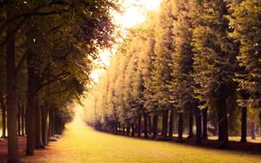 park, Trees, nature