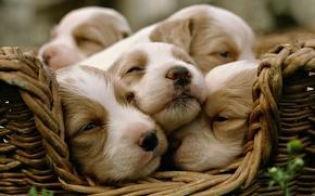 Dogs, Friends, beauty