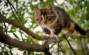 kitten, tree, branch