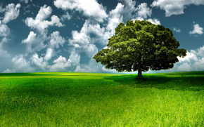 champ, arbre, solitaire, herbe