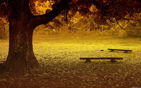 park, Trees, bench, nature