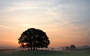 sunset, sky, landscape, tree