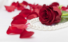 роза,  цветок,  бусы