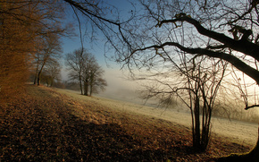 niebla, Los rboles, Naturaleza