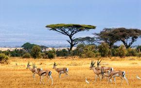 животные, Африка, красиво, супер