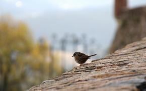 птица,  воробей,  город