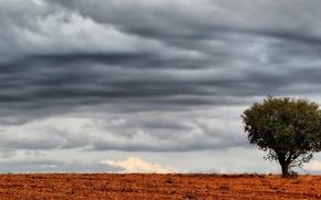 tree, sky, landscape