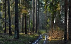 bosque, carretera, Naturaleza