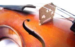 скрипка, музыка, жёлтый