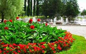 fiori, parco, alberi, pietre, fontana, aiuola