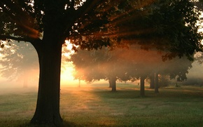 деревья,  трава,  лучи,  солнце,  закат
