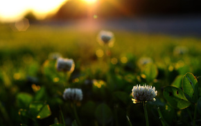 Macro, macro, erba, fiori, raggi, sole
