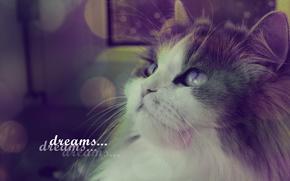 chat, moustache, voir, rves, penses