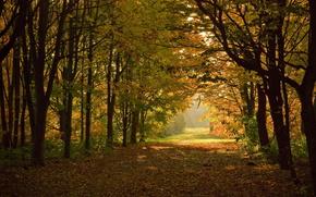 Trees, park, summer