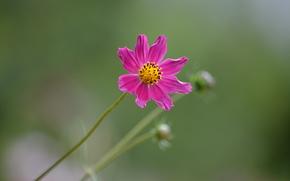 マクロ, 花, 優しさ