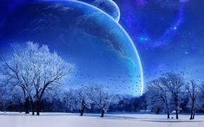 冬, 月, 空, 青, 木