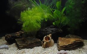 acquario, antiquariato, erba, conchiglia, Ciottoli