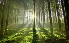 лес,  лето,  свет,  природа