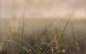 grass, dew, nature