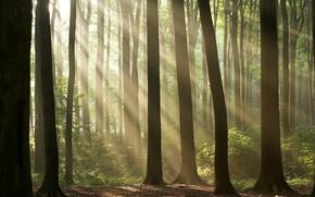 деревья, лес, свет, солнце
