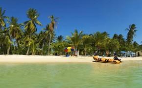 palm, tropics, vacation, boat