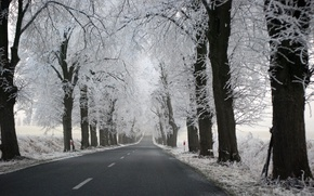 road, Trees, nature
