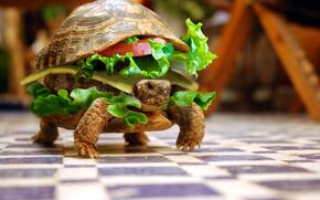tartaruga, sandwich, umorismo, animali, verdure